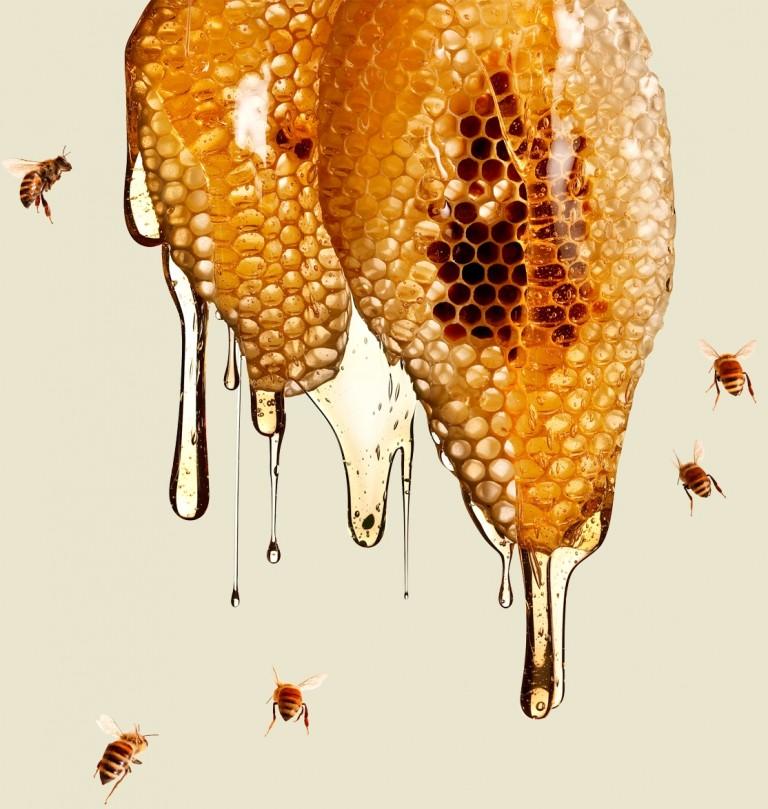 Что целебного в мертвой пчеле?