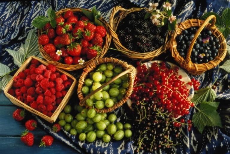 Собираем листочки и ягоды