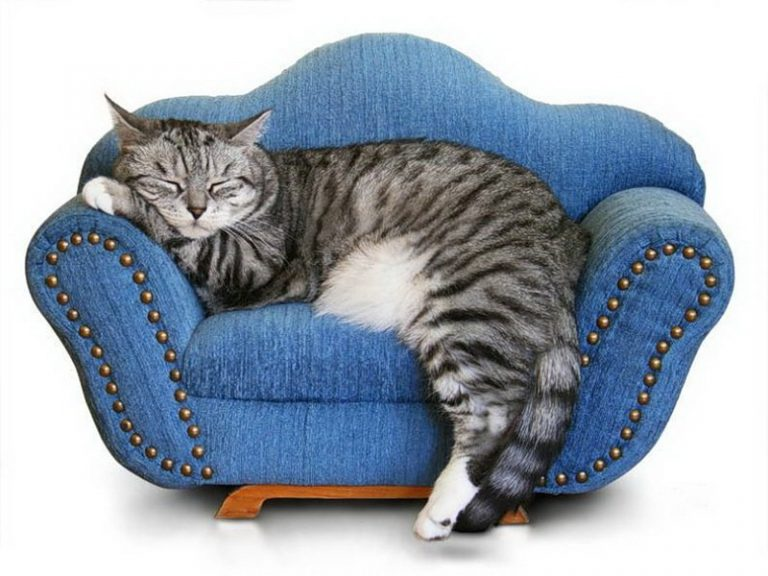 Во сне я лезу спать на табурет, как кошка…