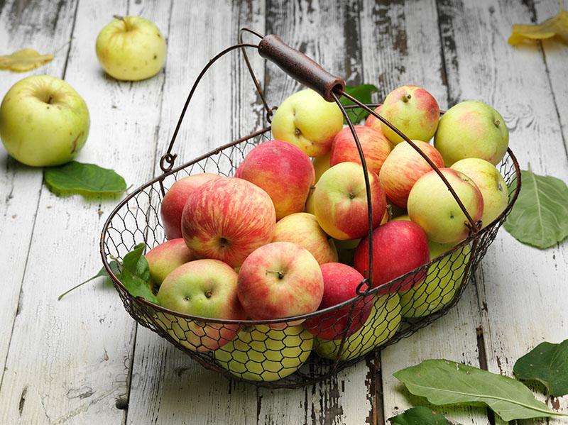 диетолог фрукты