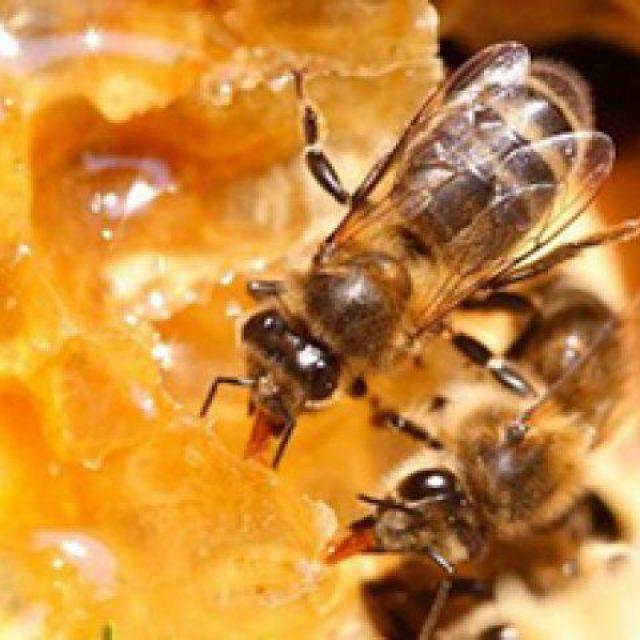 Пчела пусть ужалит…