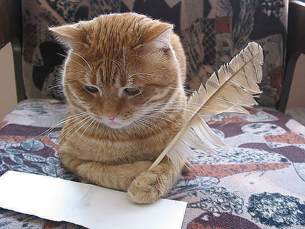 Мой кот Васька лучше всякого мужика