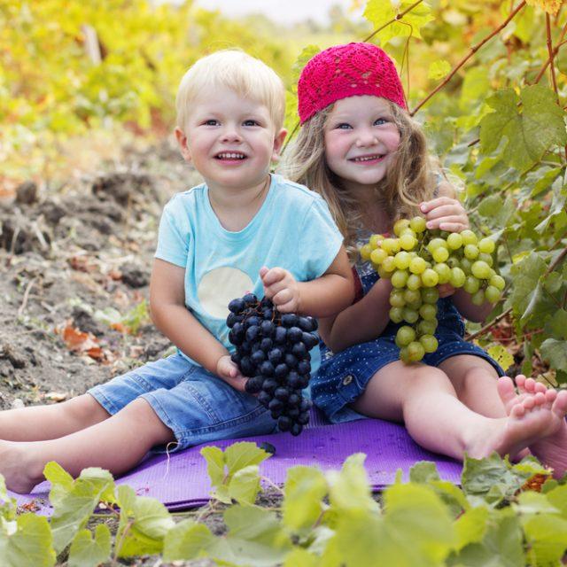 Полюбите виноград