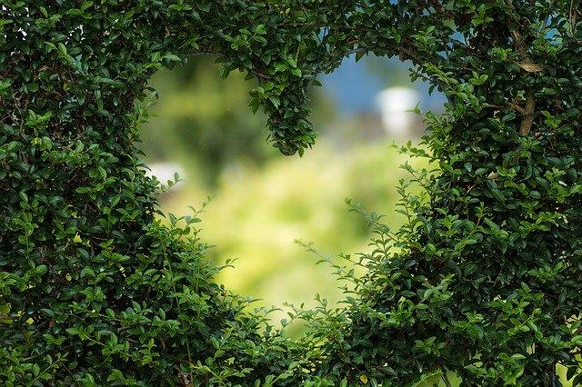 сердце photo