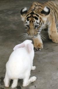 Кто твой друг?