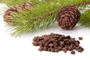 Пейте чай с настойкой кедровых орехов