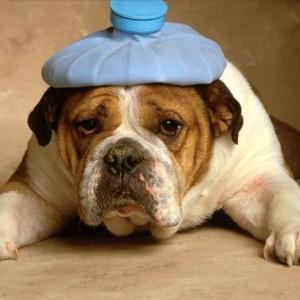 О чем болит голова